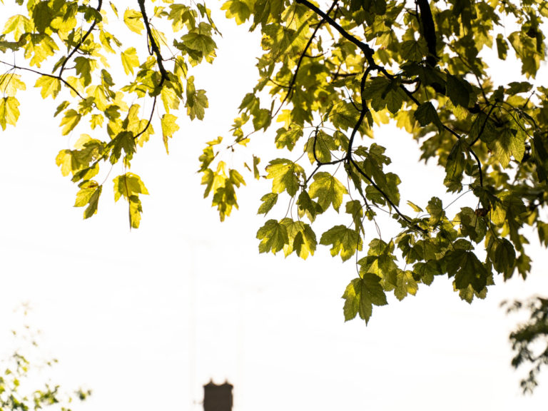 Let's fill Cambridge with trees!