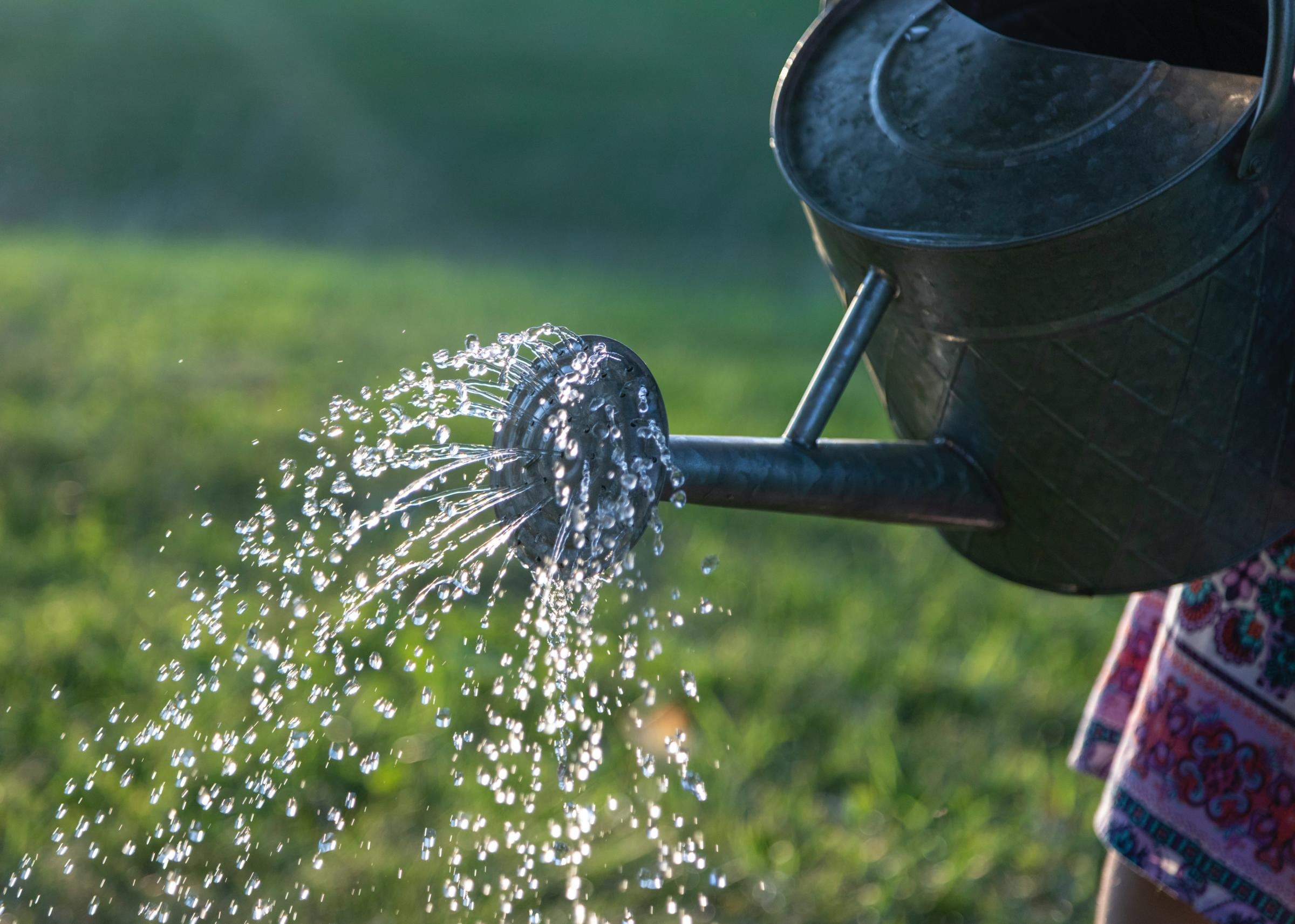 water spraying from a watering can